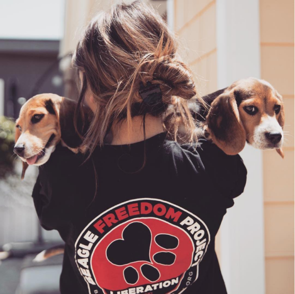 beaglefreedomphoto